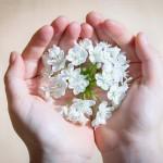 Las manos, ese preciado tesoro